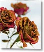 Dry Roses Metal Print