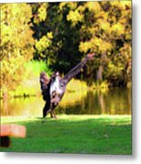 Drying Her Wings Metal Print
