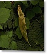 Drying Leaf In The Forest Metal Print