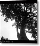 Dubignon Tree Metal Print