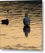 Duck And Swan At Sunrise Metal Print