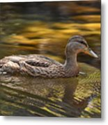 Duck Metal Print by Atul Daimari