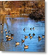 Duck Duck Goose Goose Metal Print