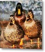 Duck - Id 16235-220308-3425 Metal Print