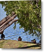 Duck Into The Shade Metal Print