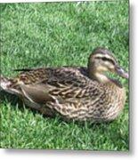 Duck Metal Print