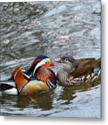 Duck Love Metal Print