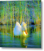 Duck On A Mission Metal Print