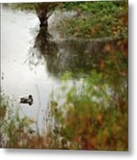 Duck On A Pond Metal Print