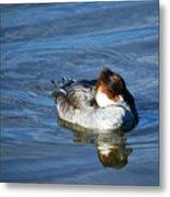 Duck On Blue Metal Print