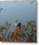 Duck On Golden Pond Metal Print