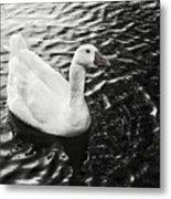 Duck On The Black Sea Metal Print