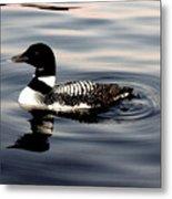 Duck On The Lake Metal Print