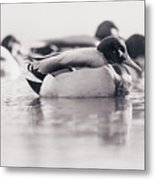 Duck On Water Metal Print