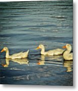 Duck Reflections Metal Print