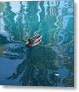 Duck Swimming In The Blue Lagoon Metal Print