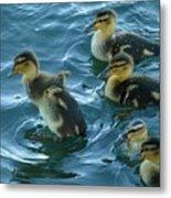 Ducklings Metal Print
