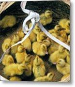 Ducklings In A Basket Metal Print