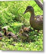 Ducklings Through The Ferns Metal Print