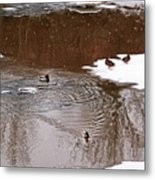 Ducks 2 Metal Print