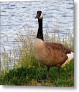 Ducks And Geese 2 Metal Print