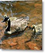 Duck Family Metal Print