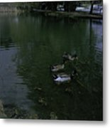Ducks In A Pond Metal Print