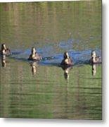 Ducks In A Row Metal Print