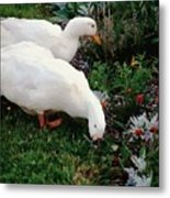 Ducks In The Garden At The Shipwright's Cafe Metal Print