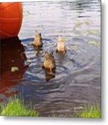 Ducks Mooning Metal Print
