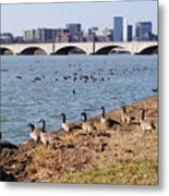 Ducks Of The Potomac Metal Print