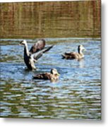 Ducks On Colorful Pond Metal Print