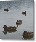 Ducks On Lake Bled Metal Print