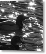 Ducks On The Canal Metal Print