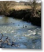 Ducks On The River In Early Spring Metal Print