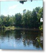 Ducks On The River Metal Print