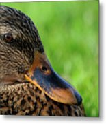 Ducky Up Close And Personal Metal Print