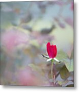 Duel Toned Ethereal Rose Bud Metal Print