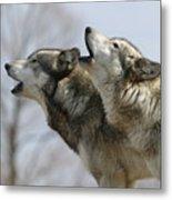 Duet Howl Metal Print
