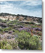 Dune Plants As Erica And Beautiful Sky Metal Print