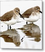 Dunlin Seeing Double Metal Print