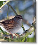 Dunnock On A Snowy Day In Winter Metal Print