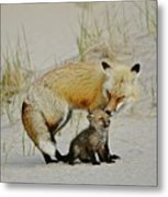Dunr Fox Father And Child Metal Print