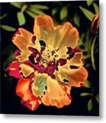 Durango Outback Mix 02 - Photopower 3200 Metal Print