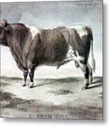 Durham Bull, 1856 Metal Print