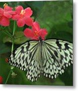 Durham Butterfly #5 Metal Print