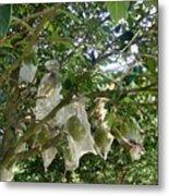 Durian Tree Hong Kong Metal Print