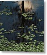 Dusk In The Swamp Metal Print