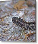 Dusky Pygmy Rattlesnake Metal Print