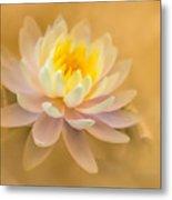Dusty Elegance  Metal Print